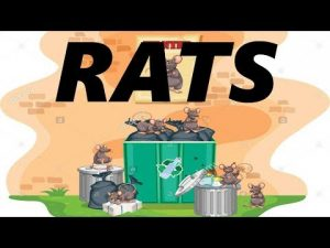 rats in the trash
